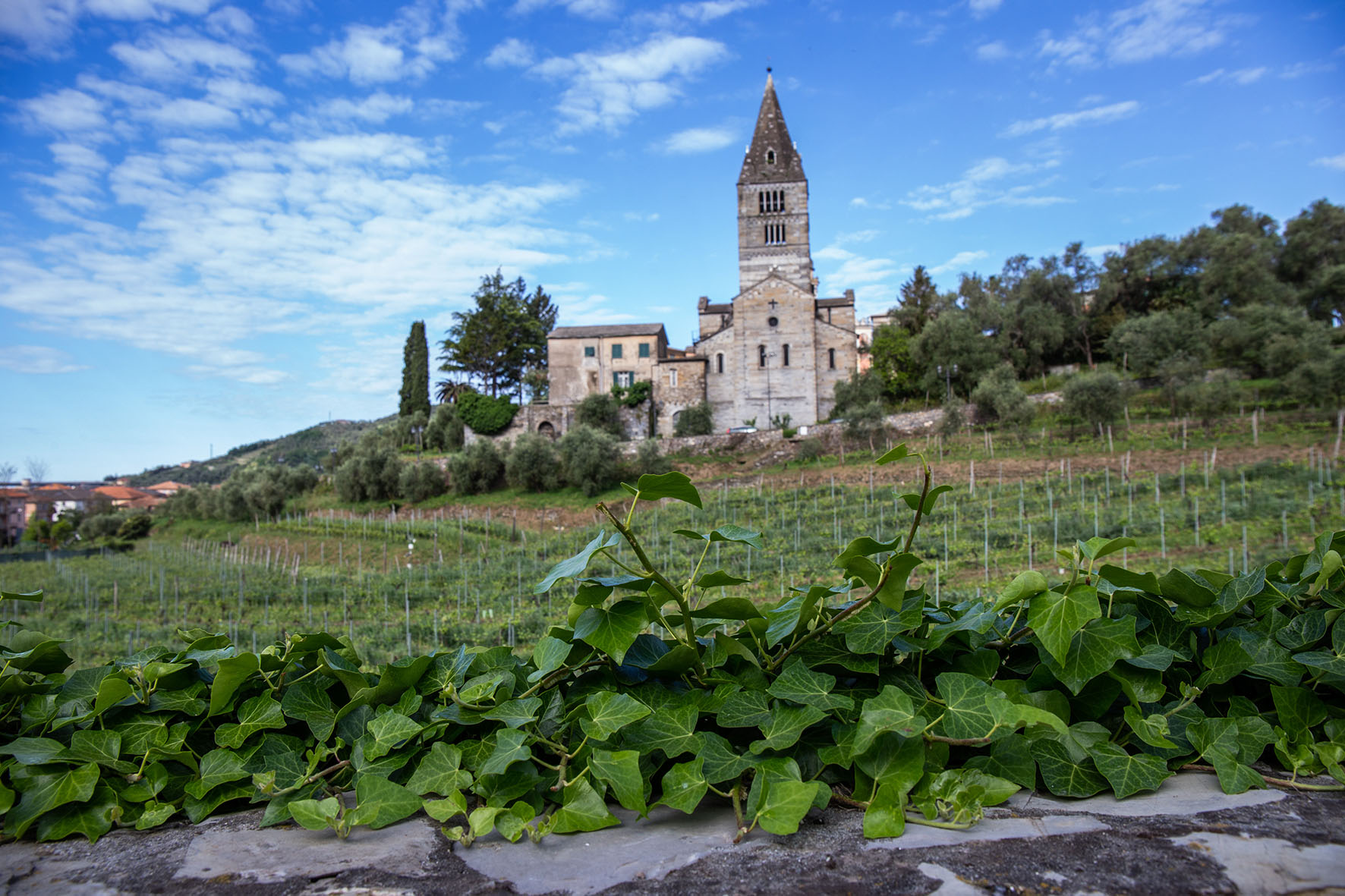 storico vigneto basilica dei Fieschi